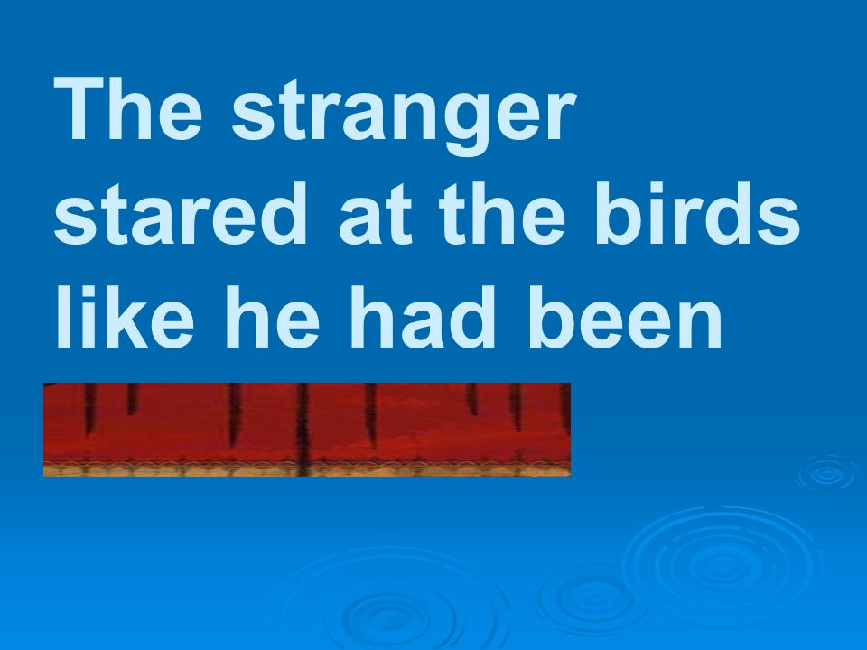 The stranger stared at the birds like he had been hypnotized.