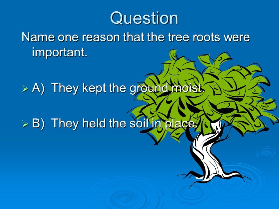 Question Name one reason that the tree roots were important.