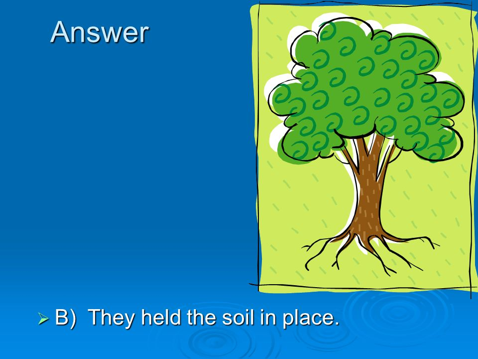 Answer B) They held the soil in place.