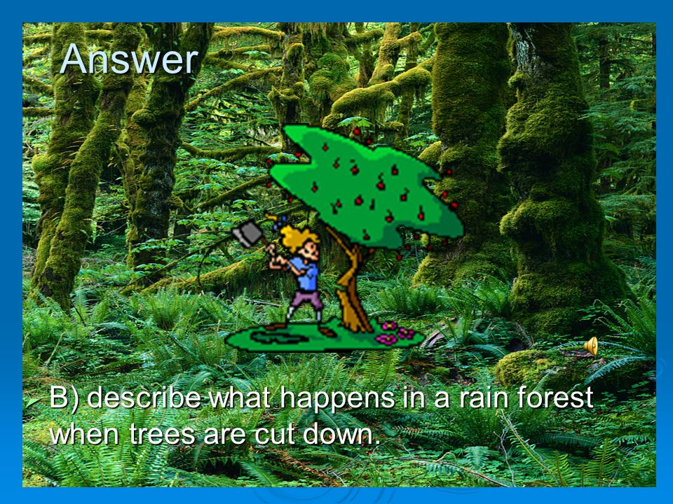 Answer B) describe what happens in a rain forest when trees are cut down.