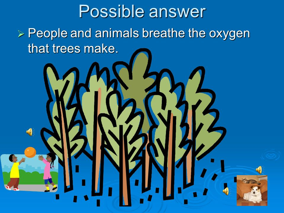 Possible answer People and animals breathe the oxygen that trees make.