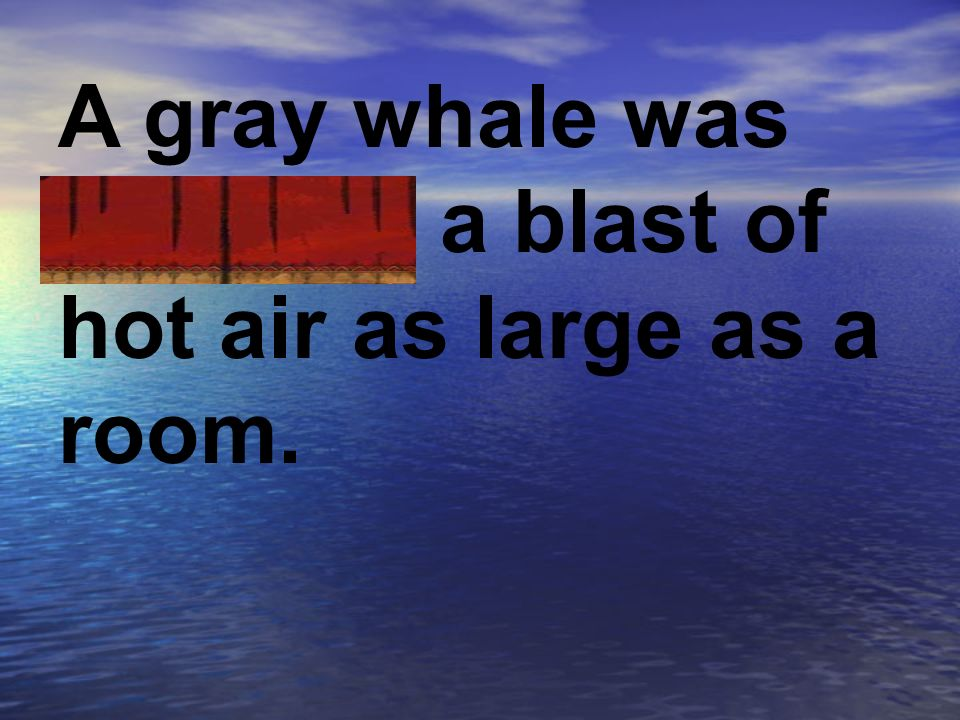 A gray whale was exhaling a blast of hot air as large as a room.