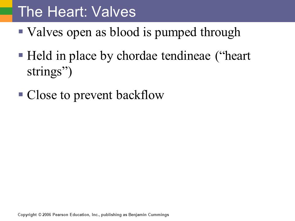 The Heart: Valves Valves open as blood is pumped through