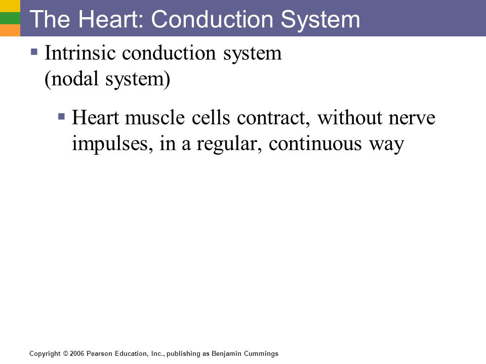 The Heart: Conduction System