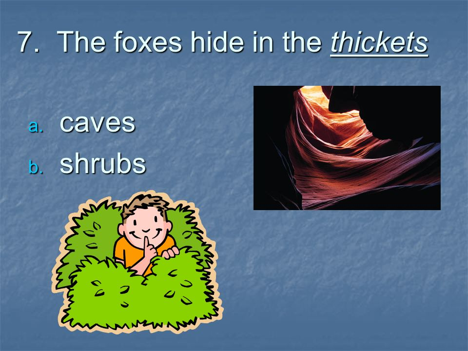 7. The foxes hide in the thickets