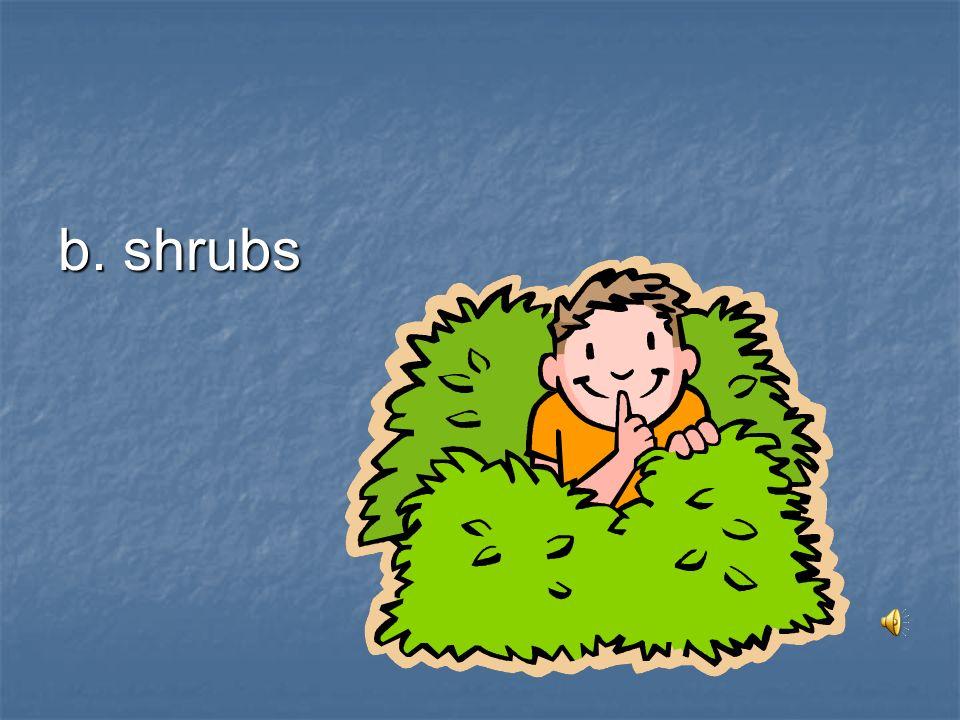 b. shrubs