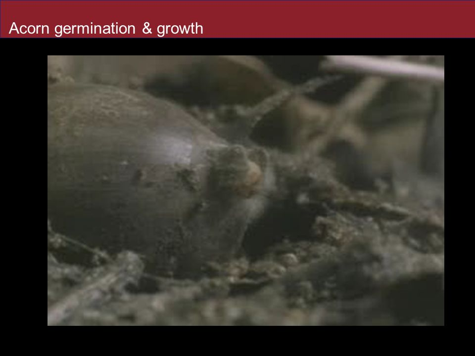 Regulation Of Plant Growth Ppt Download