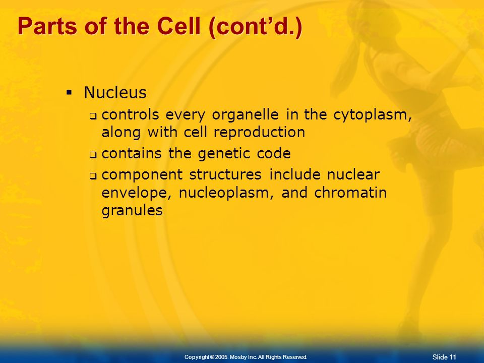 Parts of the Cell (cont'd.)