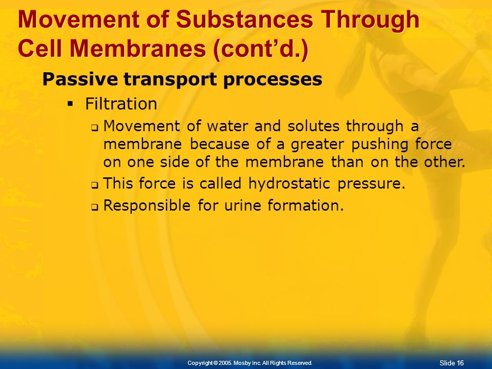 Movement of Substances Through Cell Membranes (cont'd.)