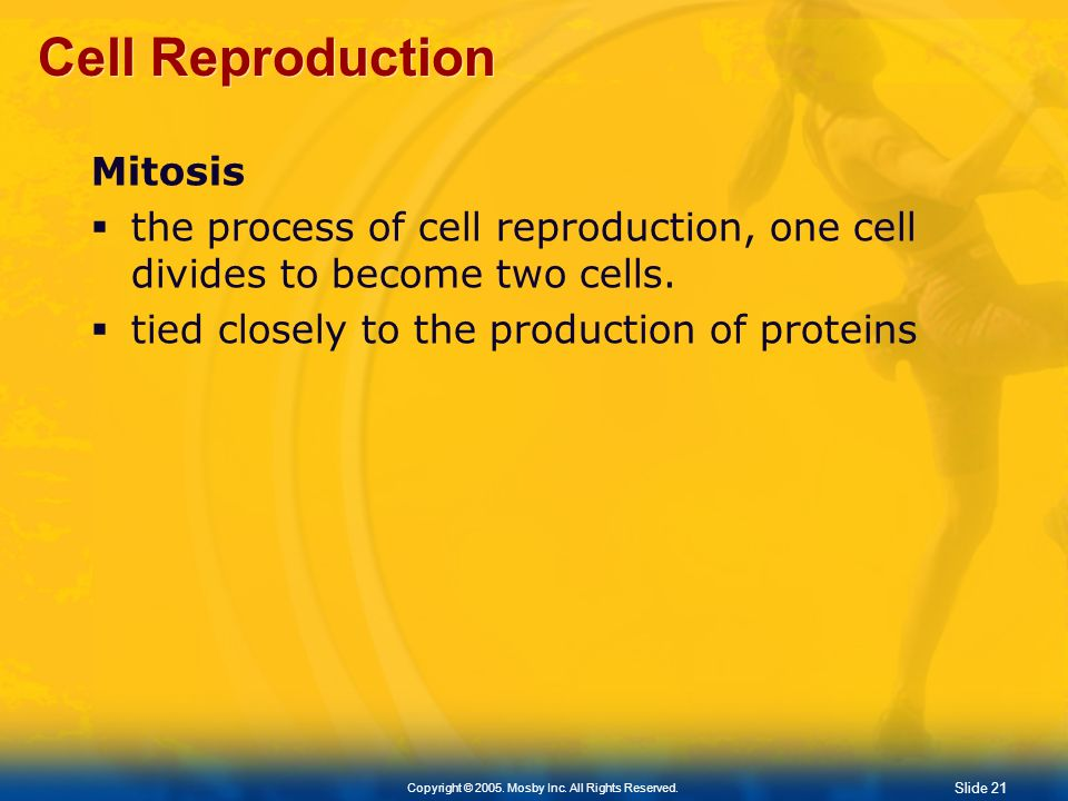 Cell Reproduction Mitosis