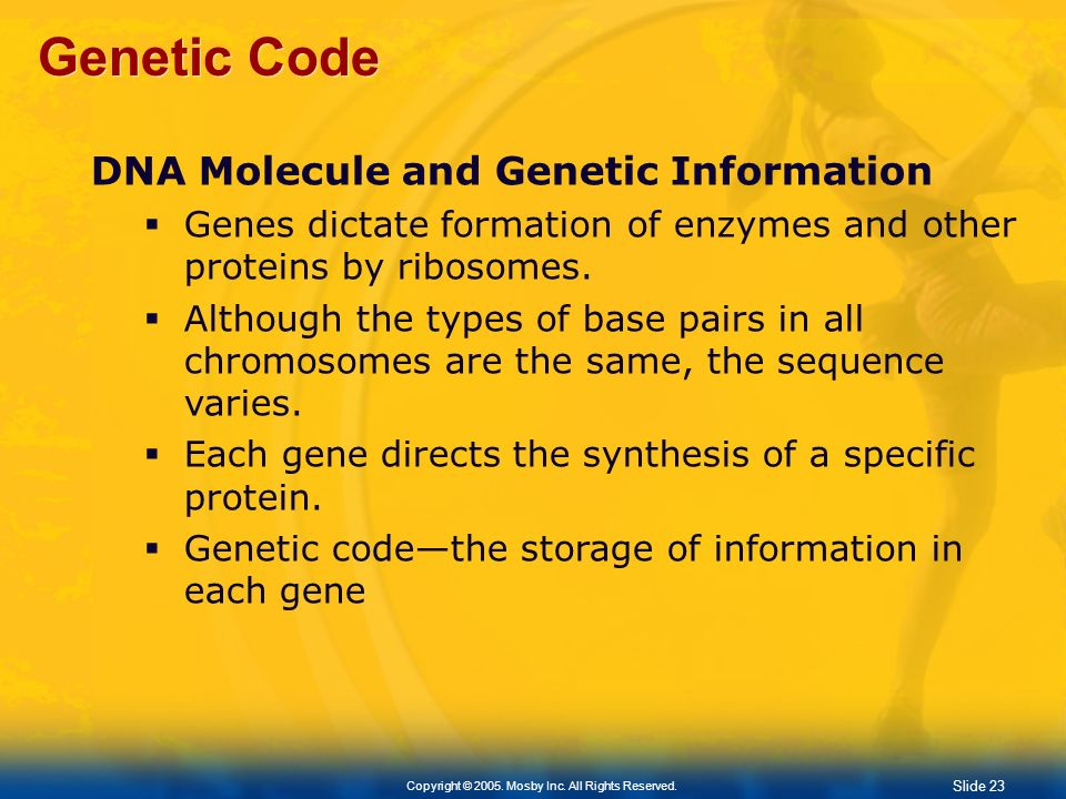 Genetic Code DNA Molecule and Genetic Information