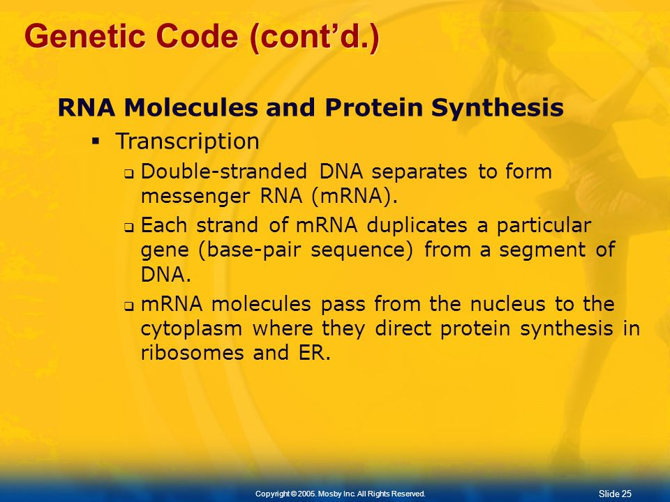 Genetic Code (cont'd.) RNA Molecules and Protein Synthesis