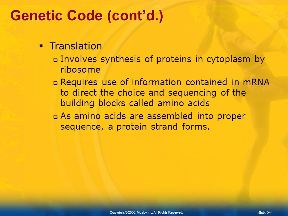 Genetic Code (cont'd.) Translation
