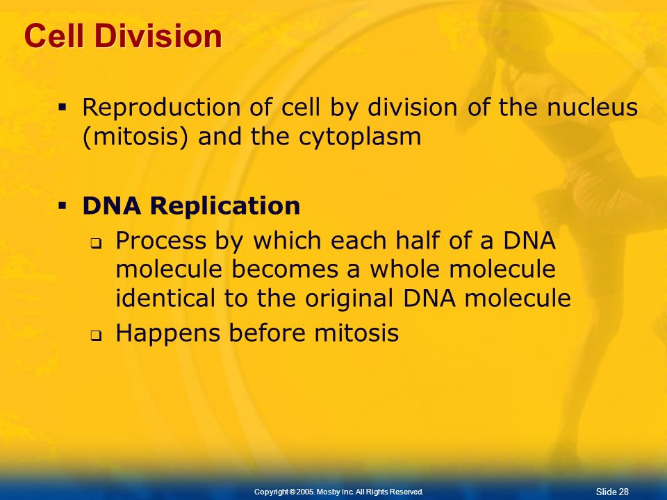 Cell Division Reproduction of cell by division of the nucleus (mitosis) and the cytoplasm. DNA Replication.