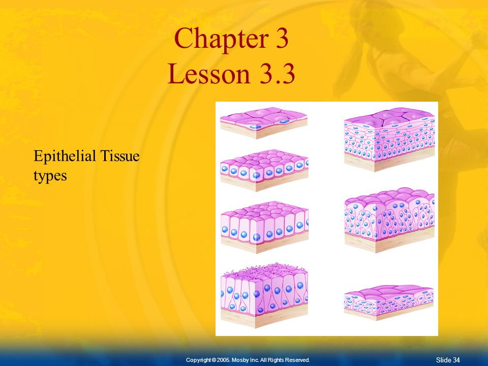 Chapter 3 Lesson 3.3 Epithelial Tissue types