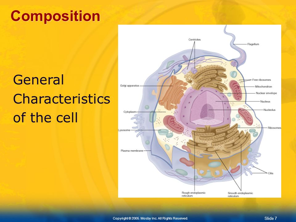 Composition General Characteristics of the cell