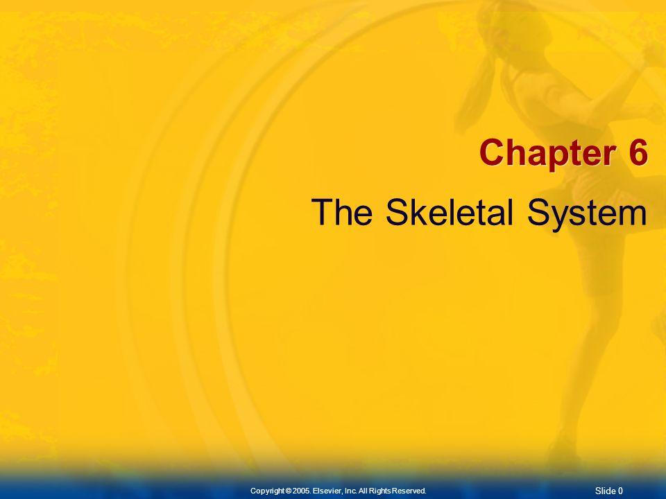 Chapter 6 The Skeletal System
