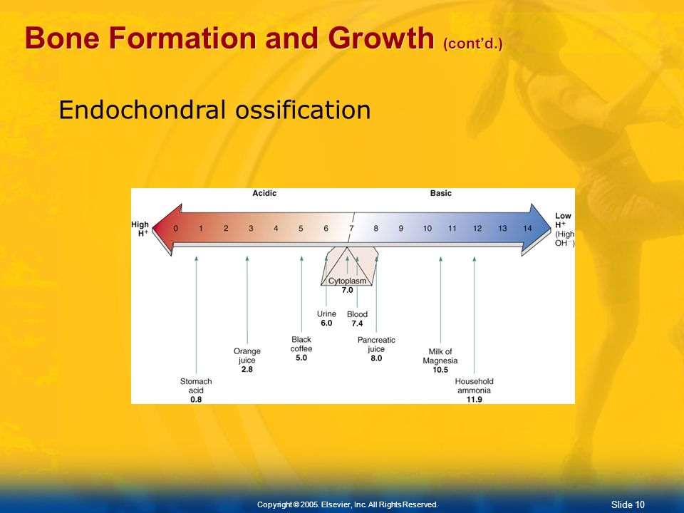 Bone Formation and Growth (cont'd.)