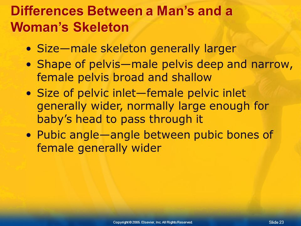 Differences Between a Man's and a Woman's Skeleton