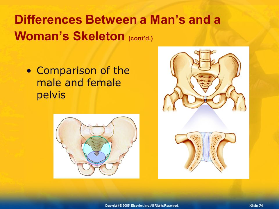Differences Between a Man's and a Woman's Skeleton (cont'd.)