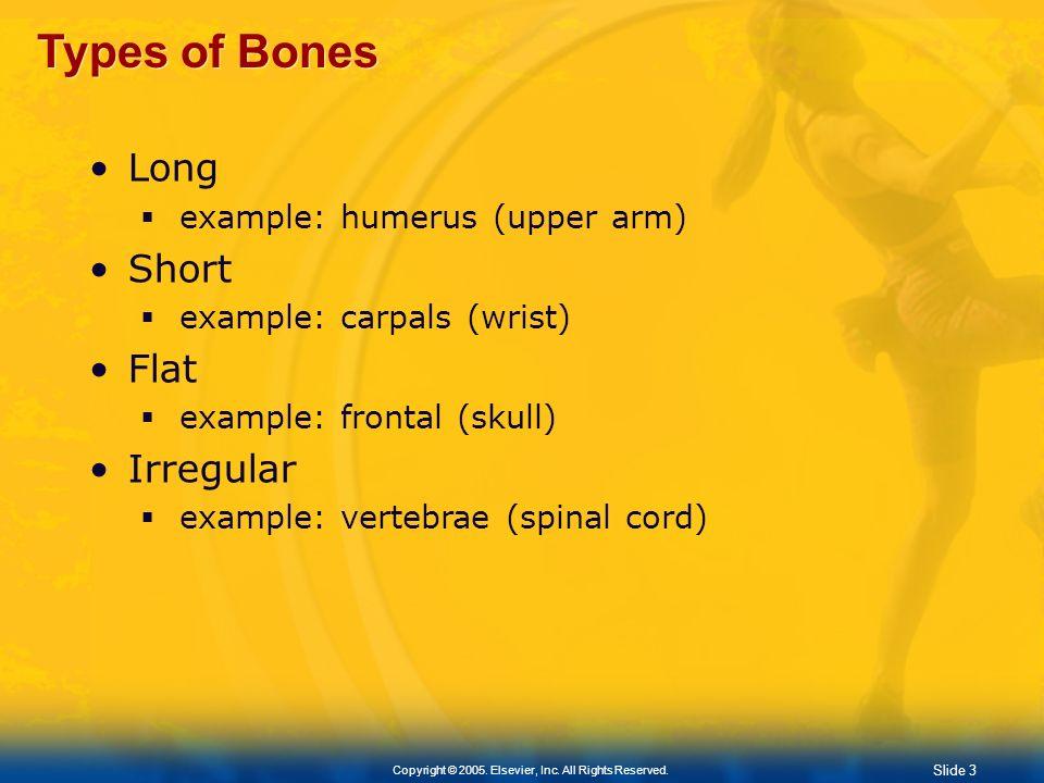 Types of Bones Long Short Flat Irregular example: humerus (upper arm)