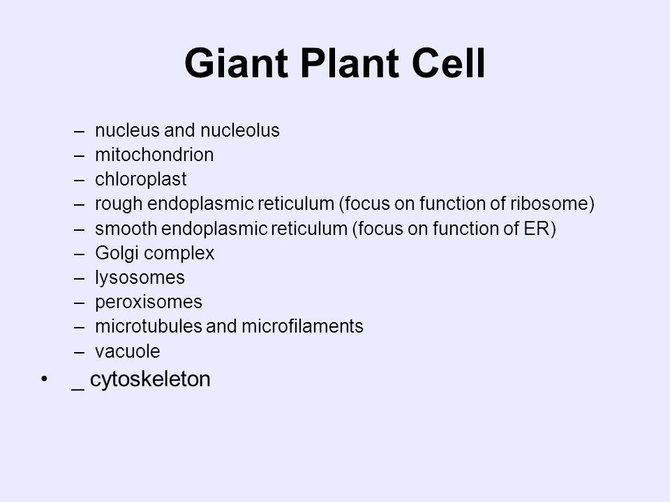 Giant Plant Cell _ cytoskeleton nucleus and nucleolus mitochondrion