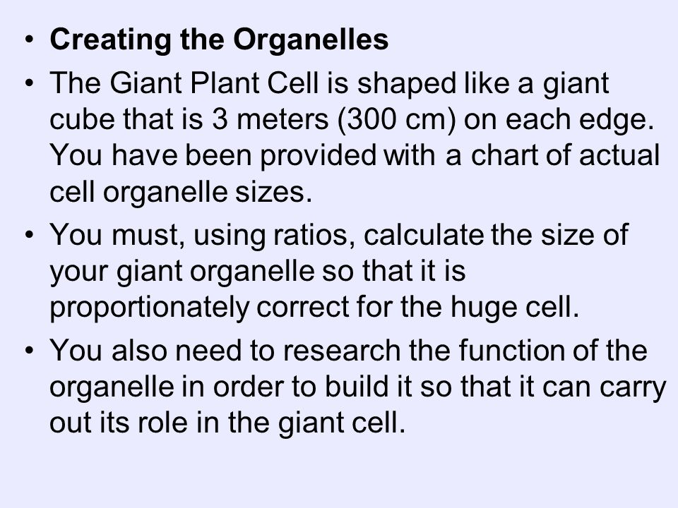 Creating the Organelles