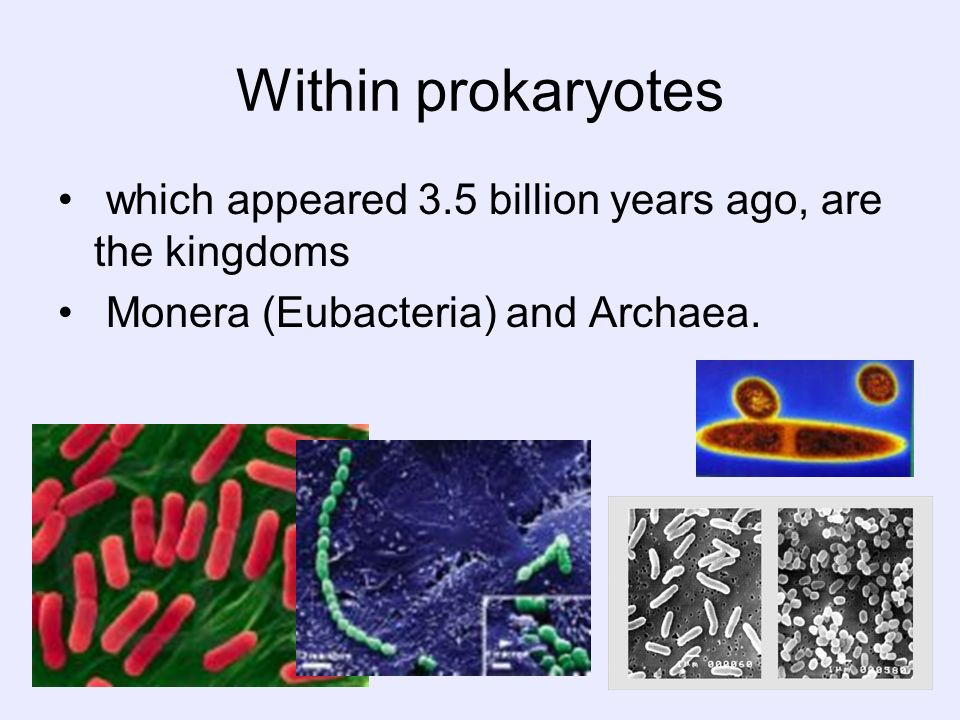 Within prokaryotes which appeared 3.5 billion years ago, are the kingdoms.