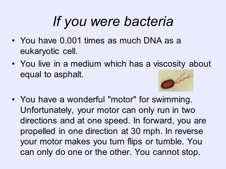 If you were bacteriaYou have 0.001 times as much DNA as a eukaryotic cell. You live in a medium which has a viscosity about equal to asphalt.