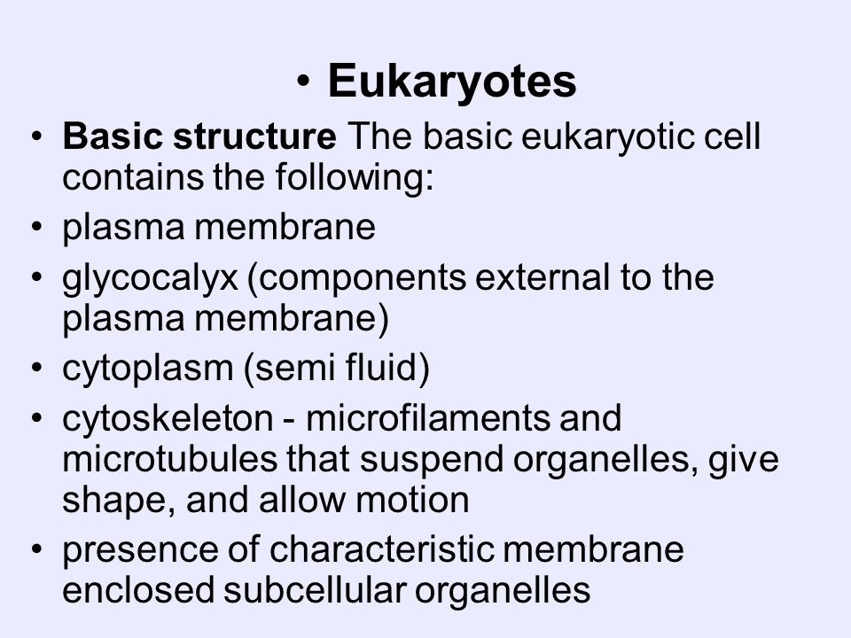 EukaryotesBasic structure The basic eukaryotic cell contains the following: plasma membrane. glycocalyx (components external to the plasma membrane)