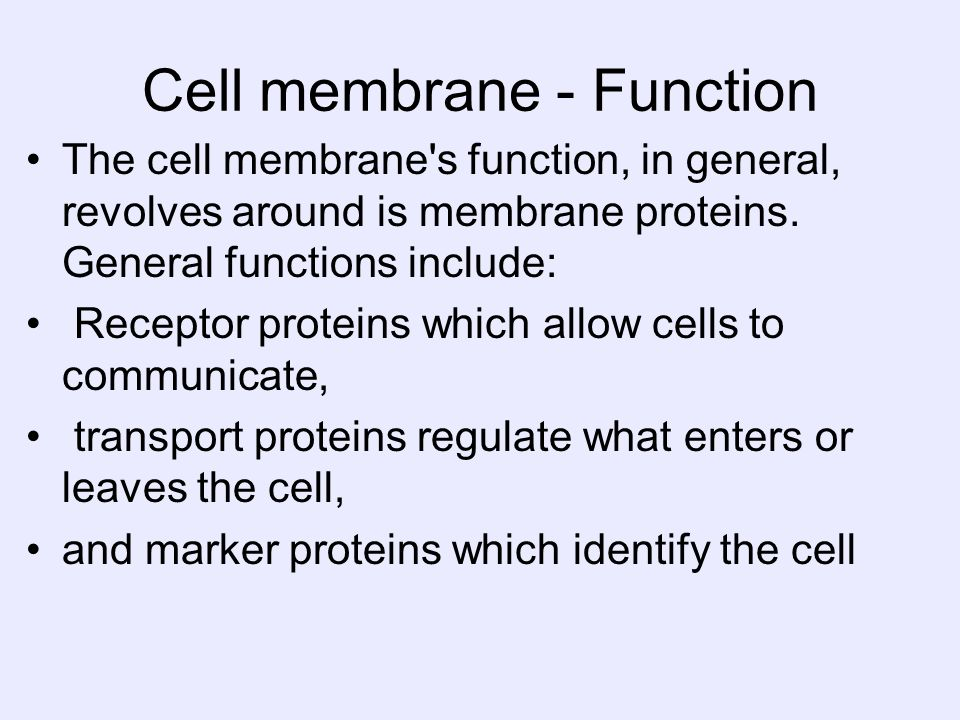 Cell membrane - Function