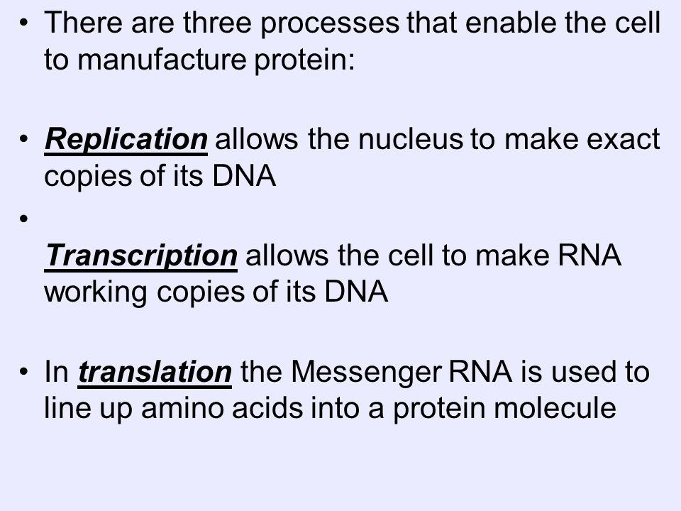 There are three processes that enable the cell to manufacture protein: