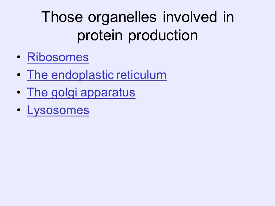 Those organelles involved in protein production