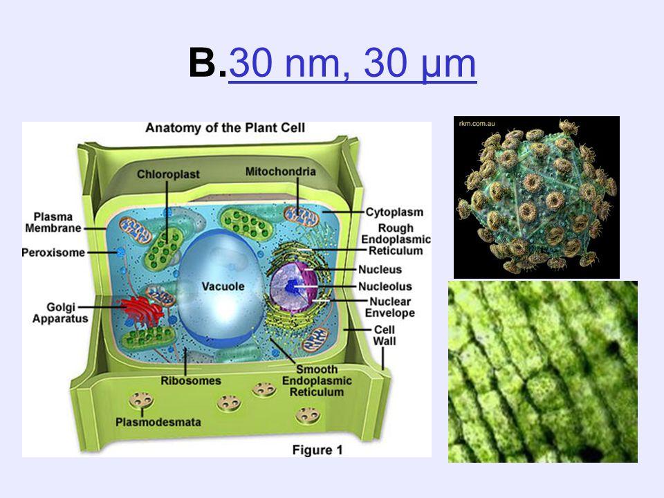 B.30 nm, 30 µm
