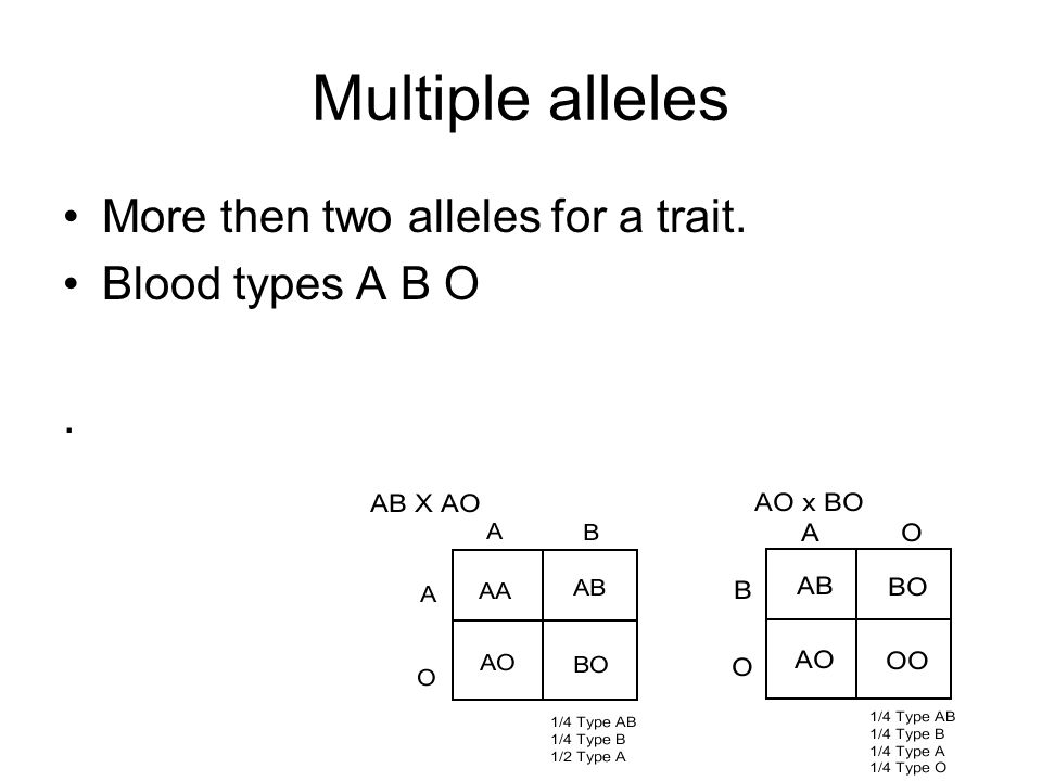 Multiple alleles More then two alleles for a trait. Blood types A B O