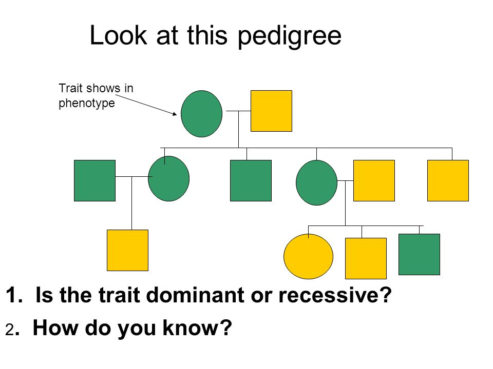 Look at this pedigree 1. Is the trait dominant or recessive