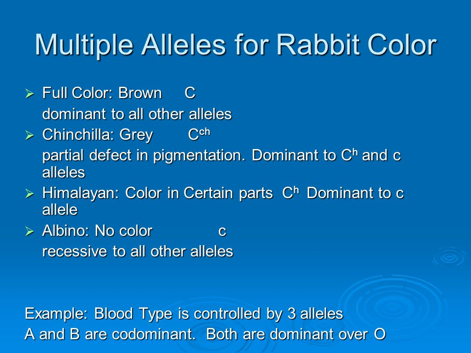 Multiple Alleles for Rabbit Color