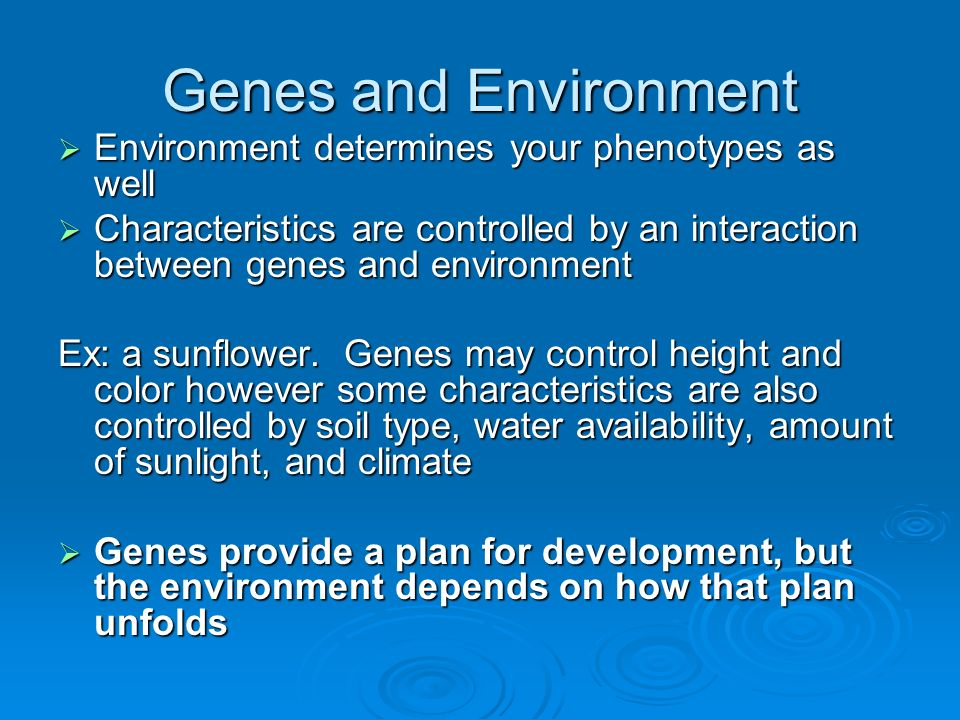 Genes and Environment Environment determines your phenotypes as well
