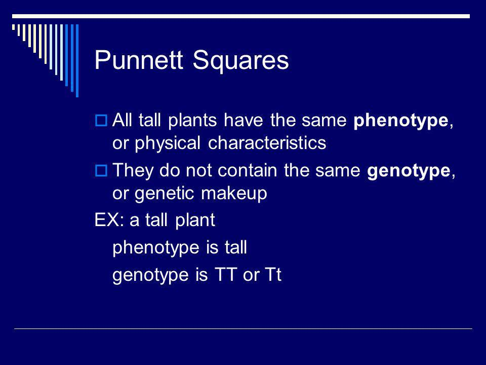 Punnett Squares All tall plants have the same phenotype, or physical characteristics. They do not contain the same genotype, or genetic makeup.