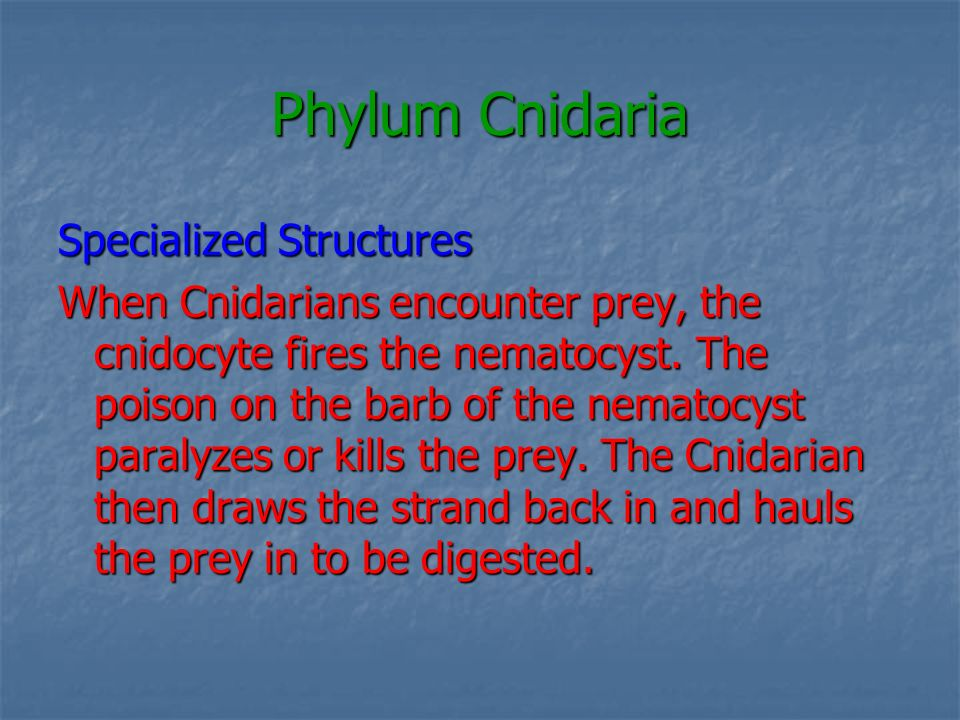 Phylum Cnidaria Specialized Structures