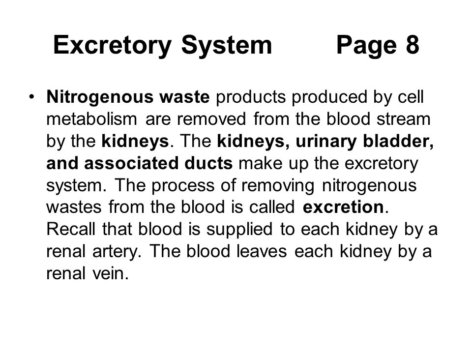Excretory System Page 8