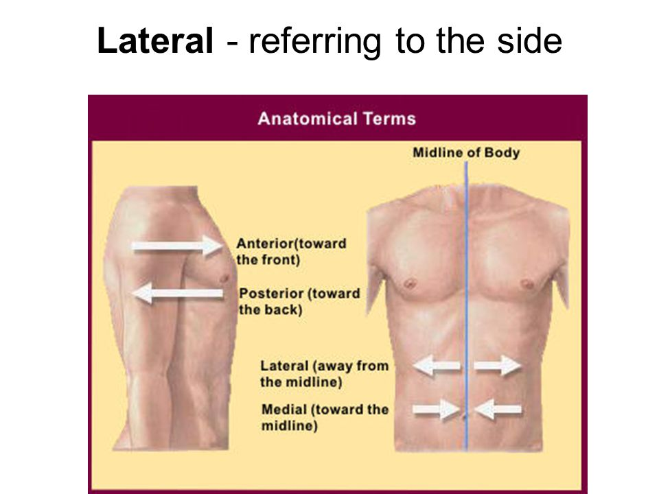 Lateral - referring to the side