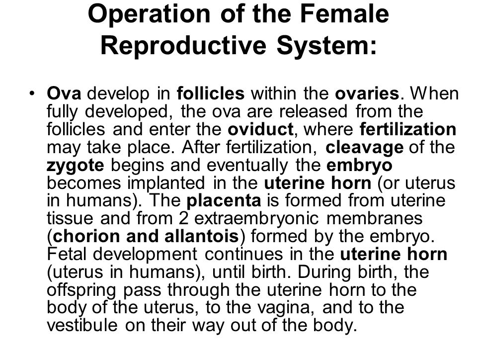 Operation of the Female Reproductive System:
