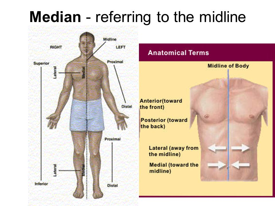 Median - referring to the midline