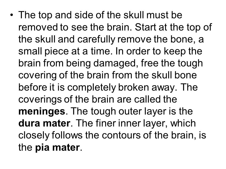 The top and side of the skull must be removed to see the brain