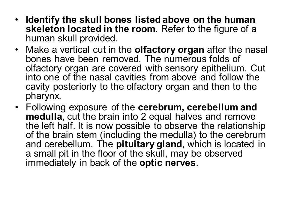 Identify the skull bones listed above on the human skeleton located in the room. Refer to the figure of a human skull provided.
