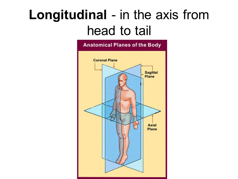 Longitudinal - in the axis from head to tail
