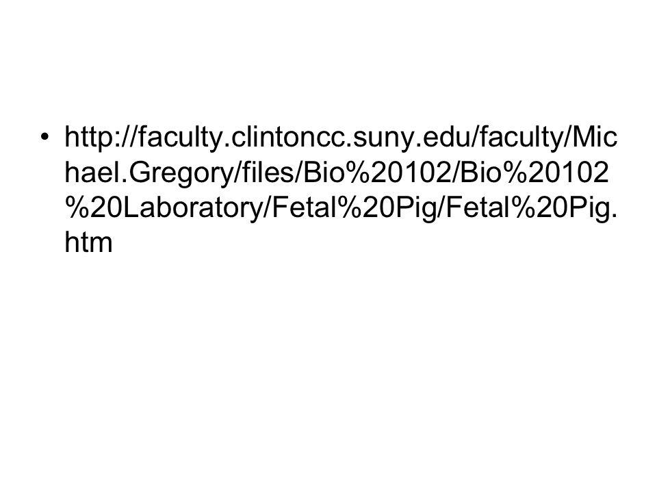 http://faculty. clintoncc. suny. edu/faculty/Michael