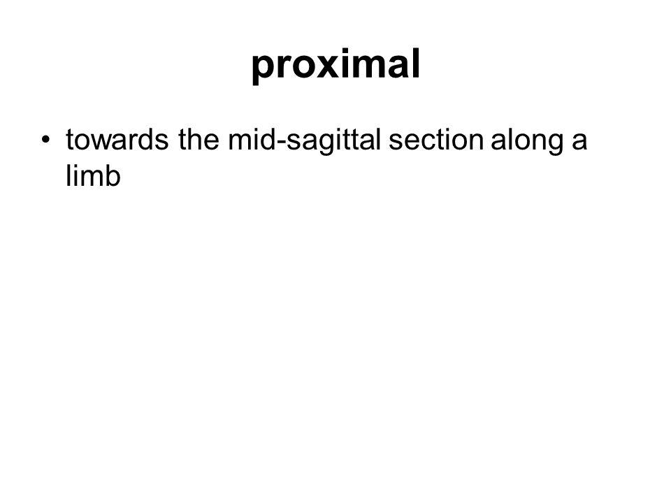 proximal towards the mid-sagittal section along a limb