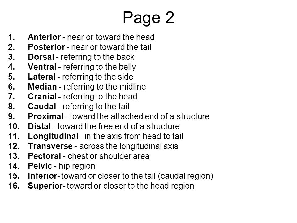 Page 2 Anterior - near or toward the head